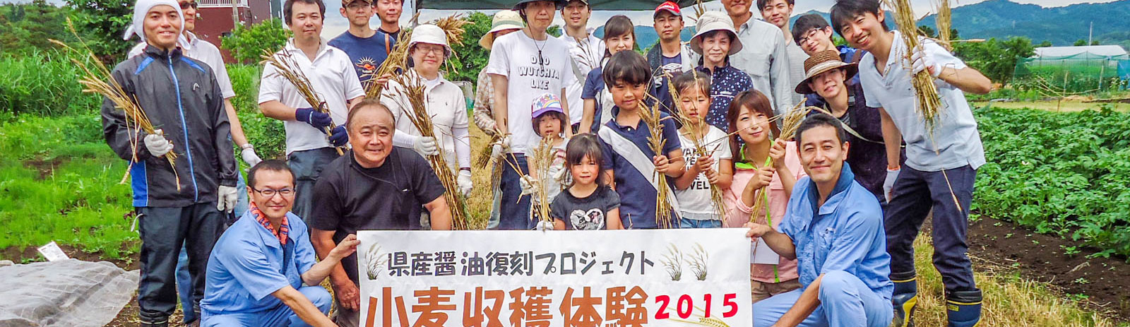 新潟県産醤油復刻プロジェクト 小麦収穫体験2015